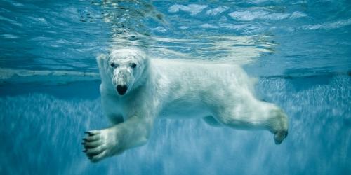 В Арктике открыты новые земли